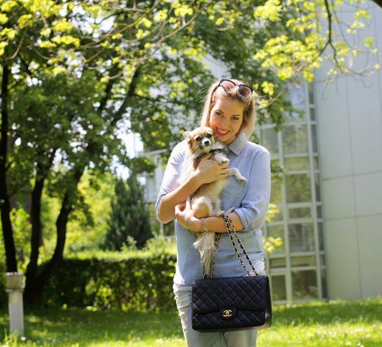 Pazi mit Chihuahua Anton und Chanel Tasche