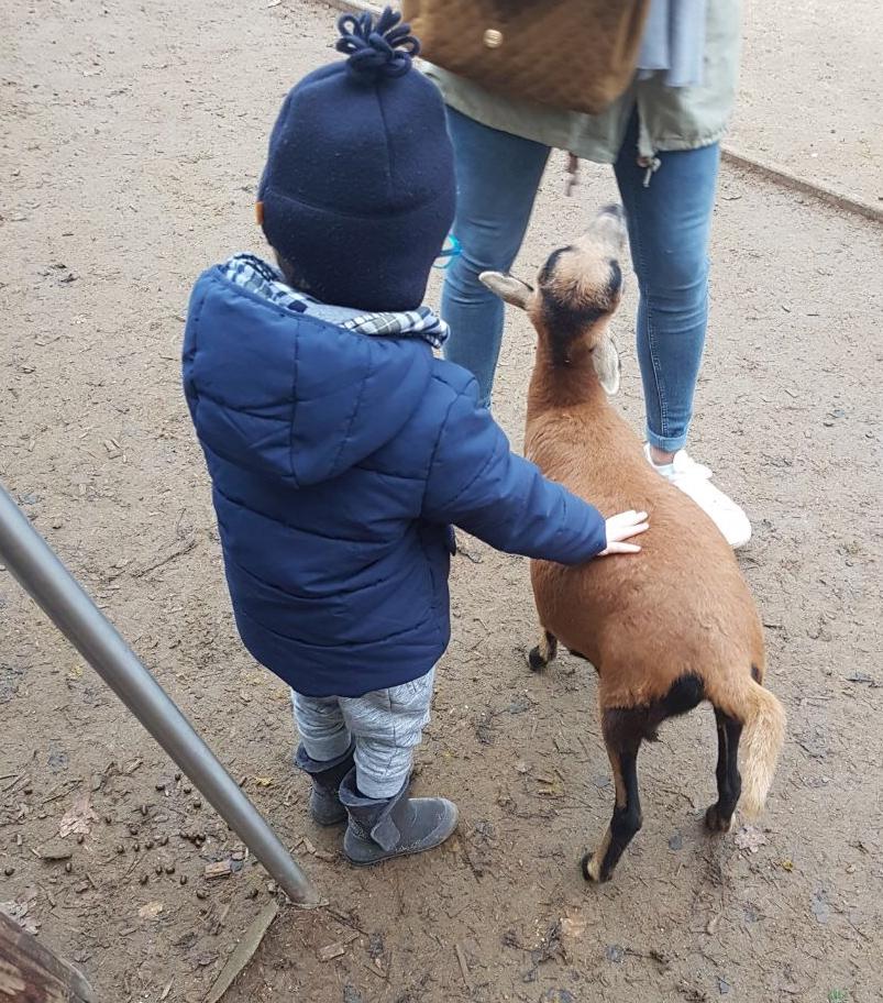 Outdoor-Aktivitäten mit Kindern im Winter, Wildpark, Wildgehege, Tiere streicheln