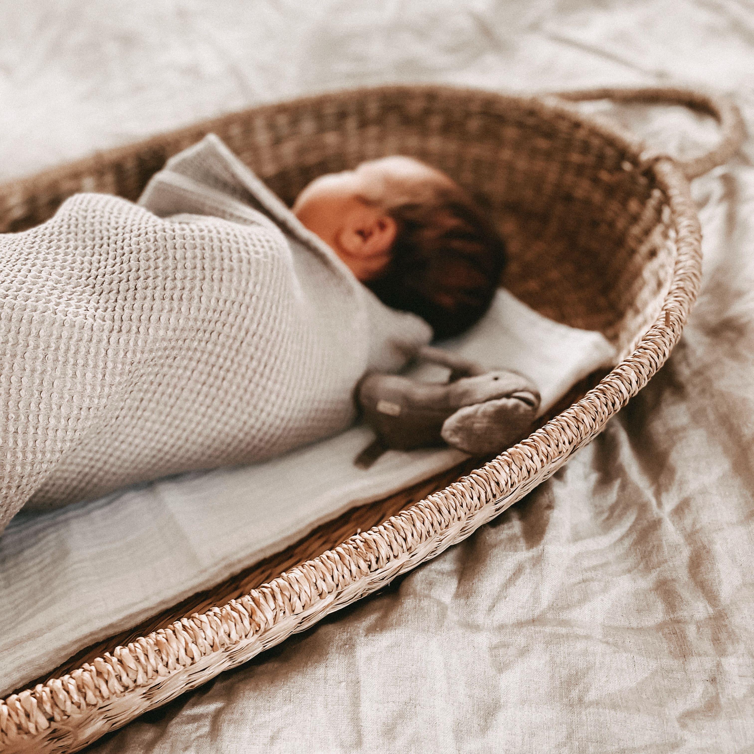 Geburtsbericht von Pazi auf Maison Pazi